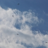 paragliding-holidays-olympic-wings-greece-220913-165