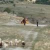 paragliding-holidays-mount-olympus-greece-132