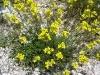 nature impressions Pindos mountain